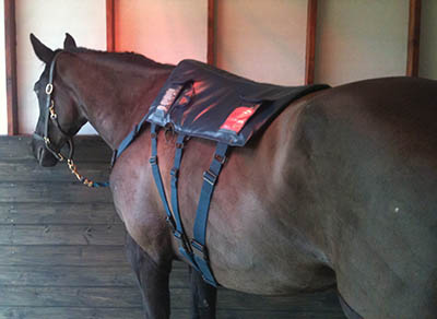 Eventing Grooms and Eventing Groom Jobs - Specialist equipment