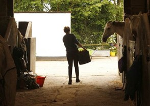 Is the Equestrian Industry getting tougher - A Grooms perspective - Do employers expect too much