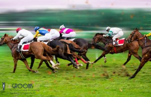 News - Equine flu outbreak sees race meets cancelled - The Grooms List