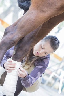 5 reasons why the equine industry needs Apprentice Grooms - proper training