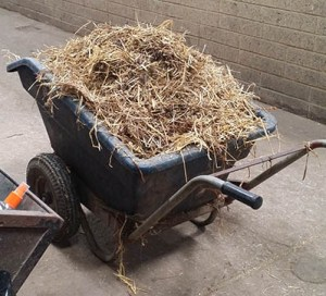 The Ultimate Equestrian Apprentice Startup Kit - Mucking out