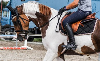 The fine art of owning AND working with horses - fulfilling your own riding ambitions