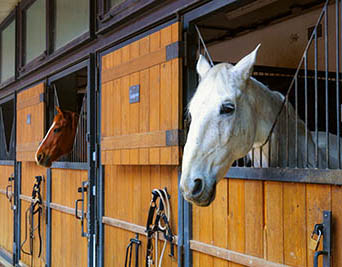 The fine art of owning AND working with horses - keeping your horse at your place of work