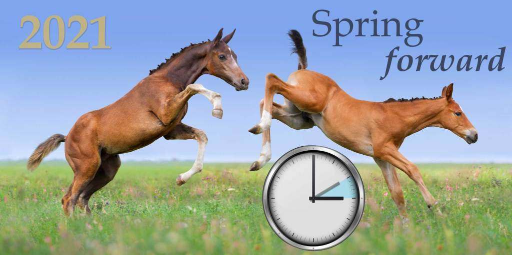 Spring Forward in the Equine Industry 2021
