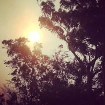 Post Bushfire