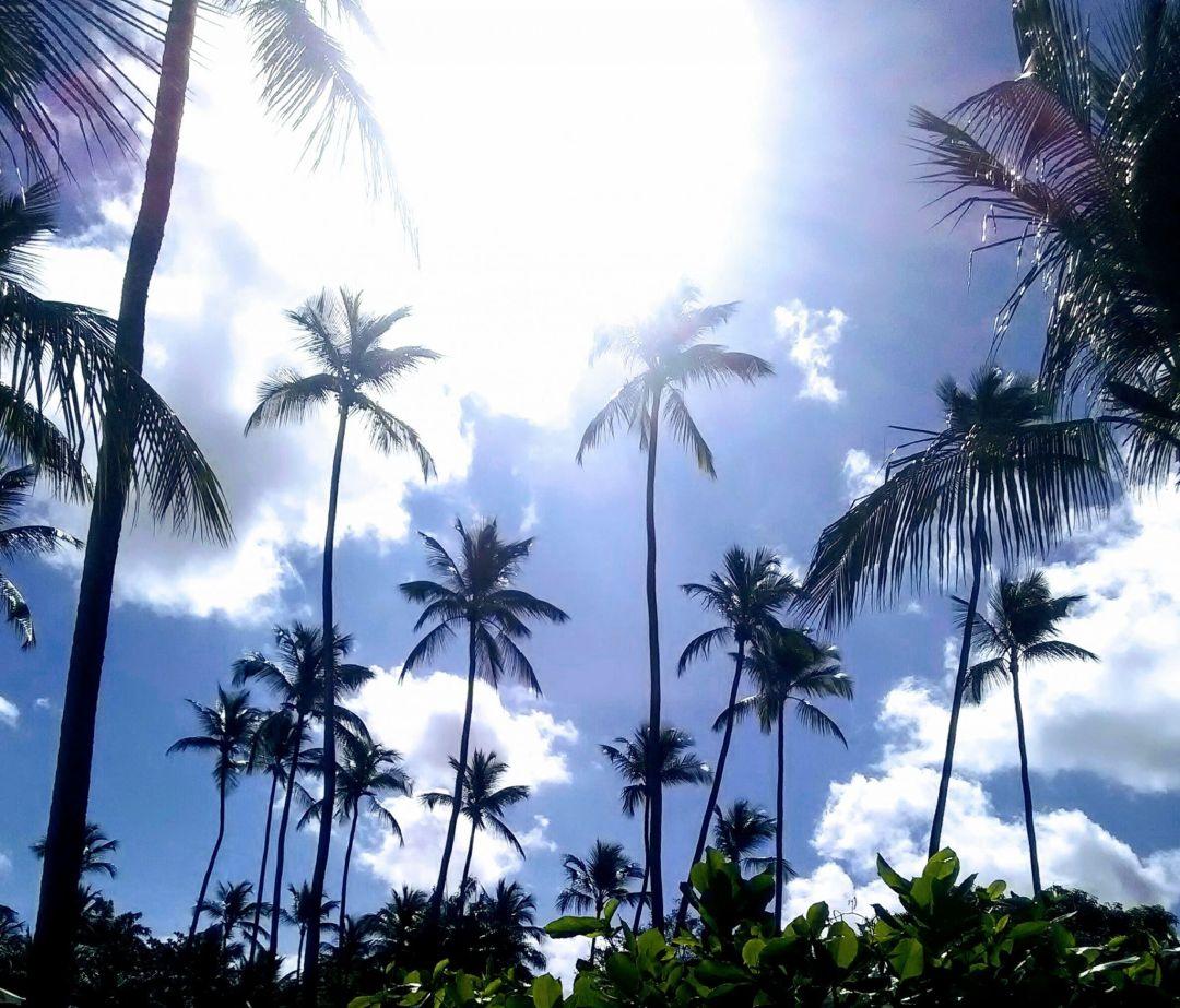 Barbados Trip Report 2018 – Final Episode