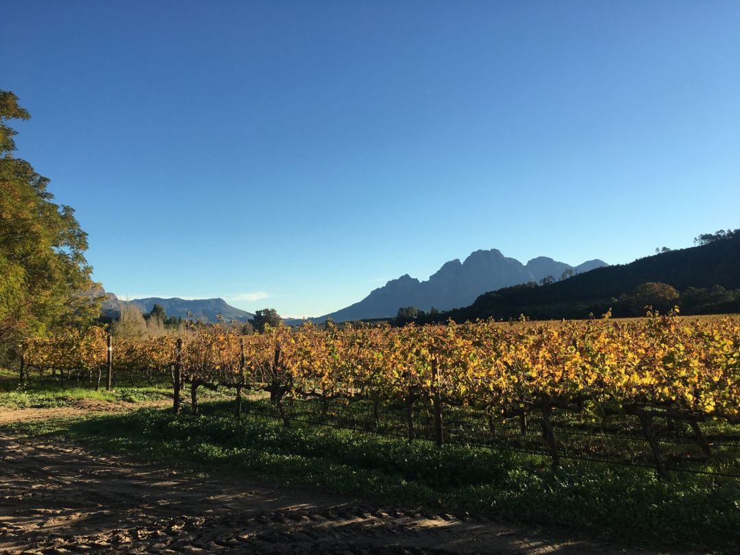 Franschhoek Wine Tram – where to visit on the Blue/Green line