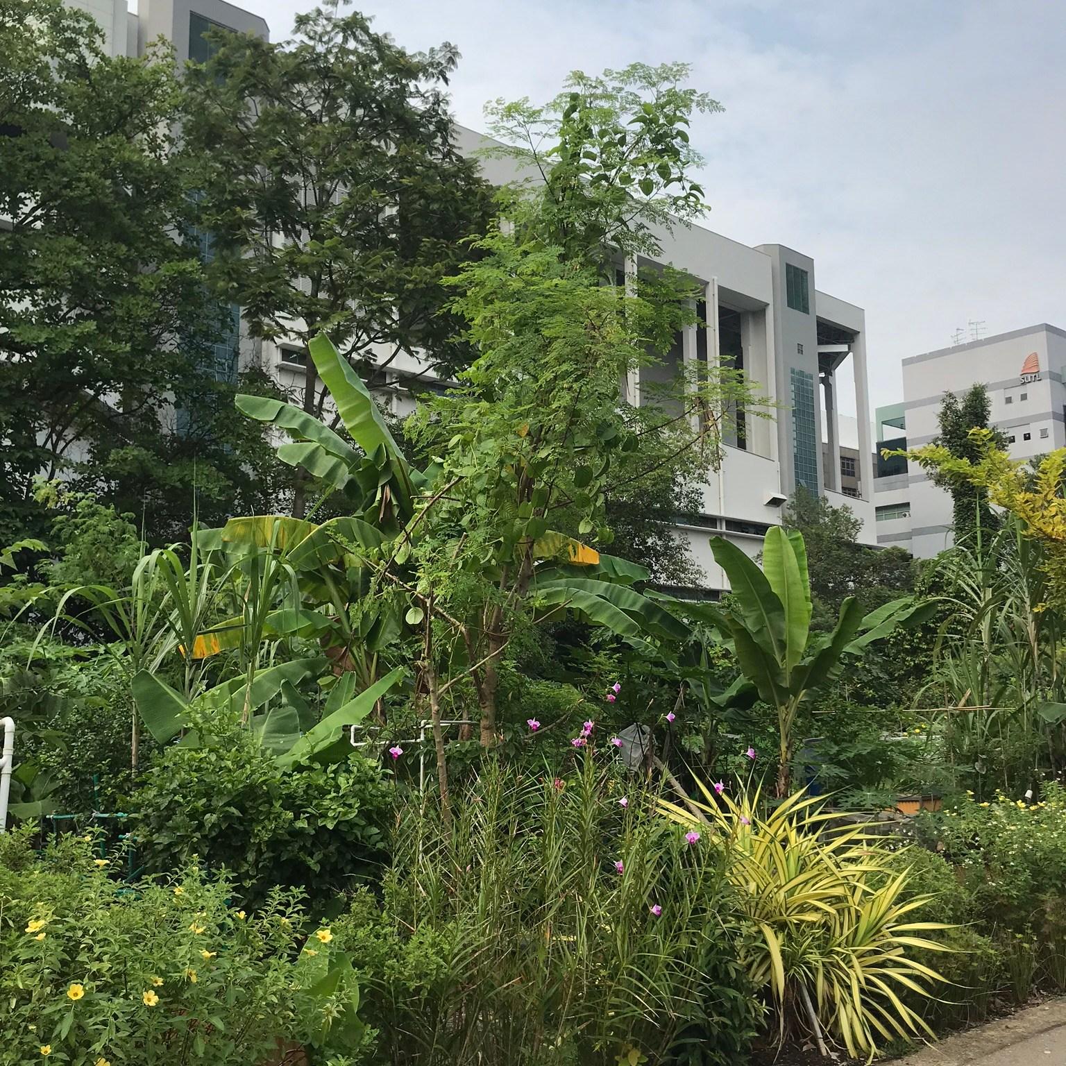 garden-Hort-Park