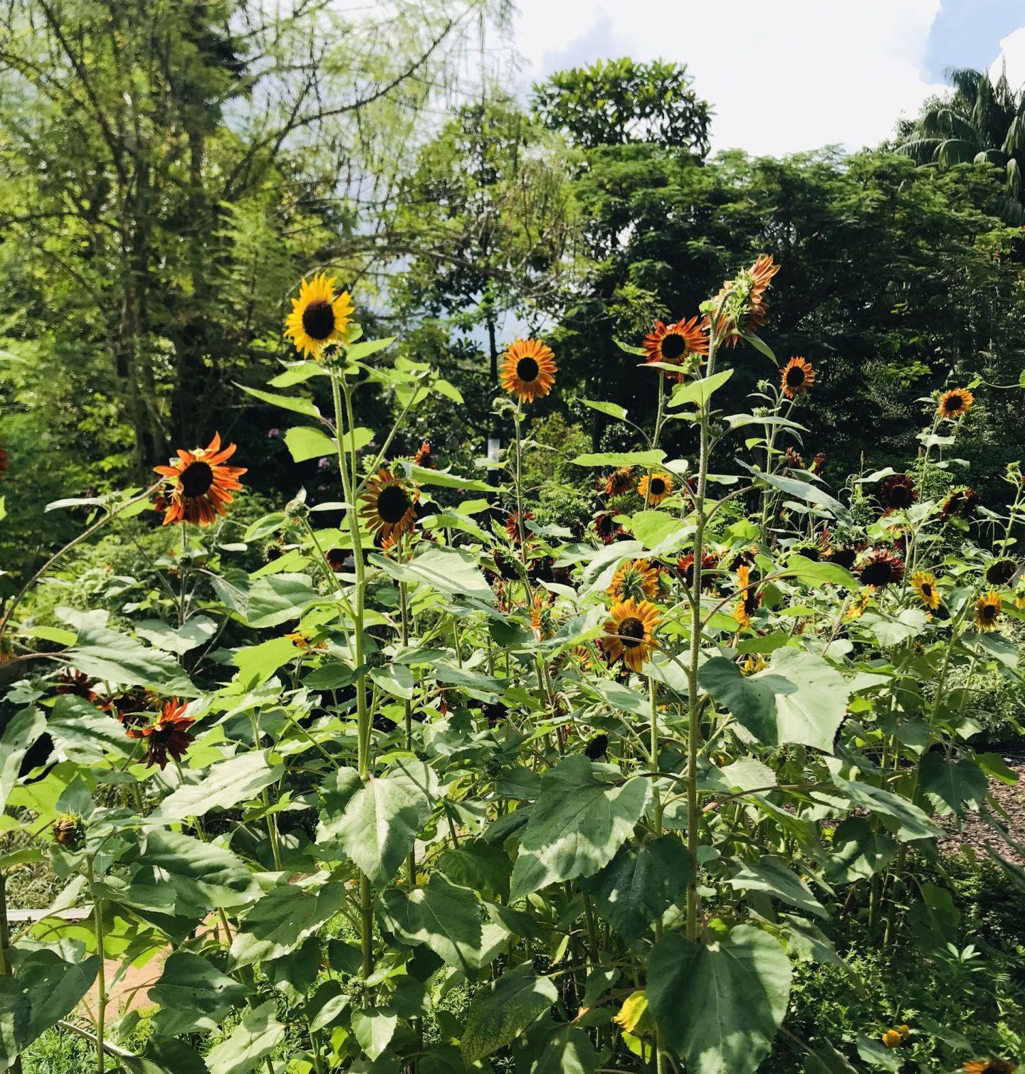 Butterfly-garden-Hort-Park