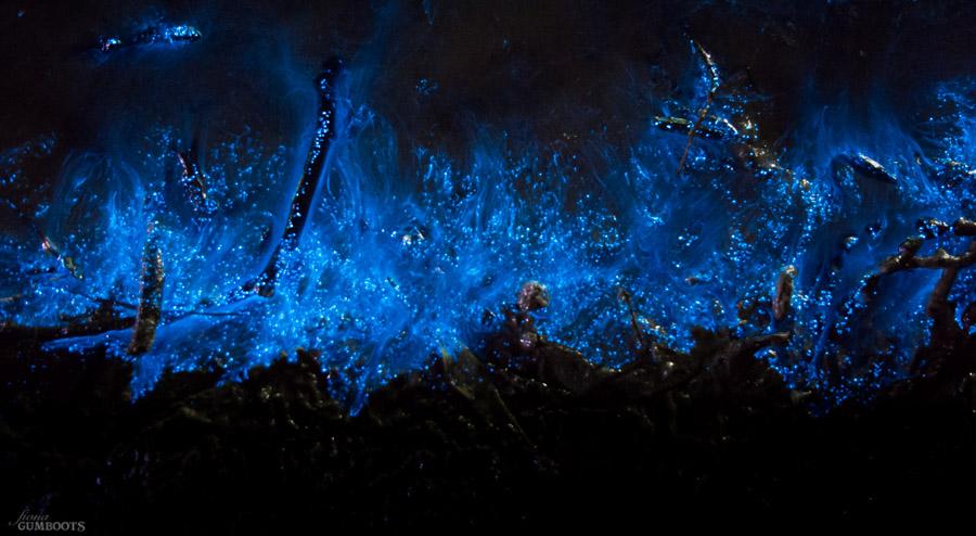 Bioluminescence_May 25, 2015-56