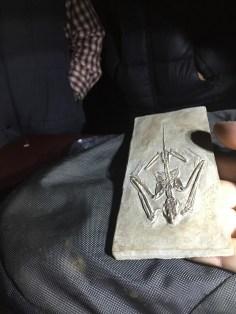 Ancient fossil bat
