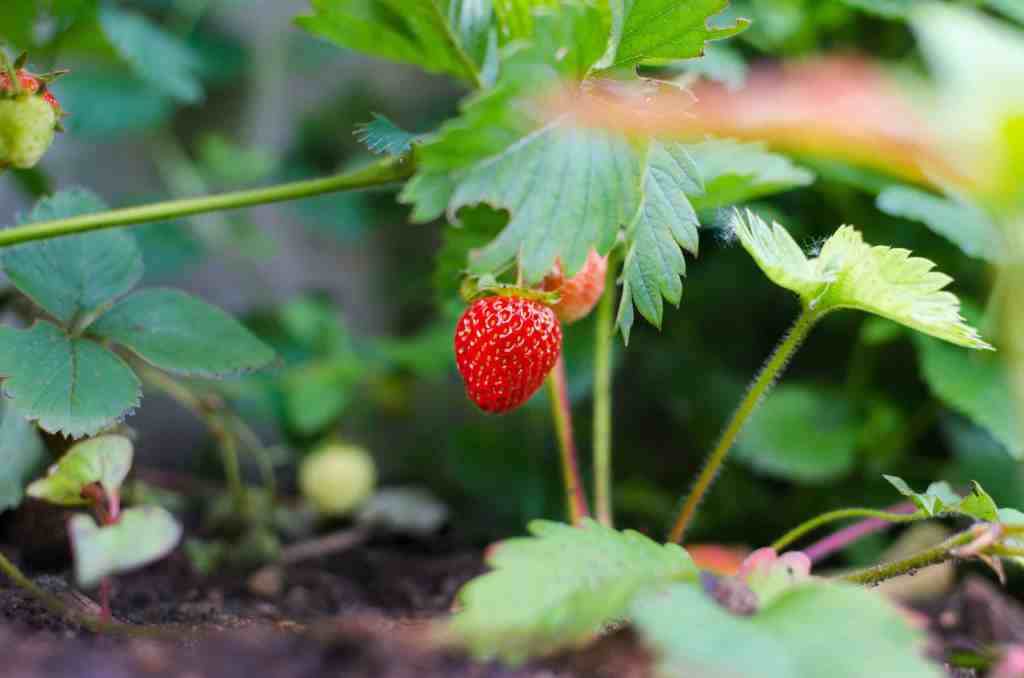 18 Seeds You Can GROW at Home for Food