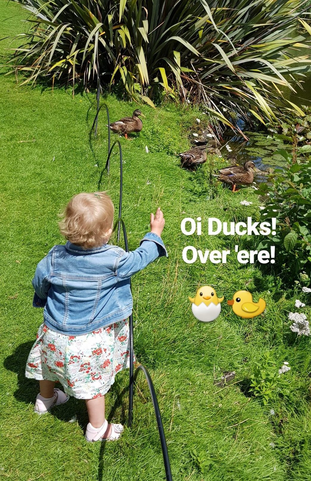 little girl pointing to ducks