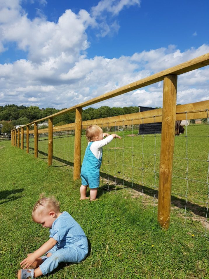 little boy looking at horse bocketts farm