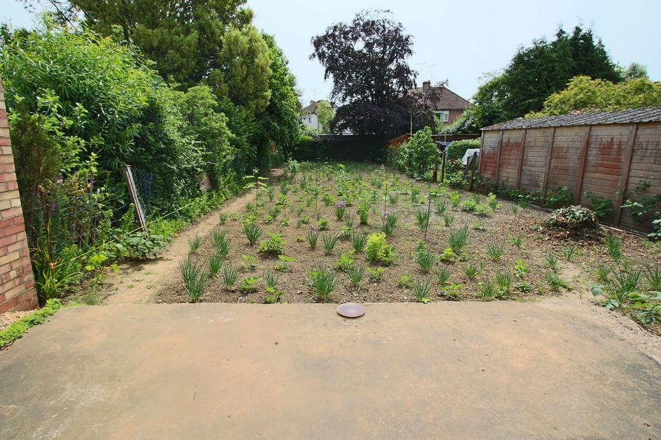 image of a garden used as a vegetable patch