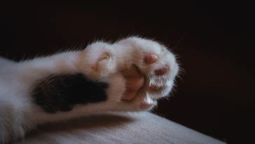 close up cat paws for best cat nail clippers