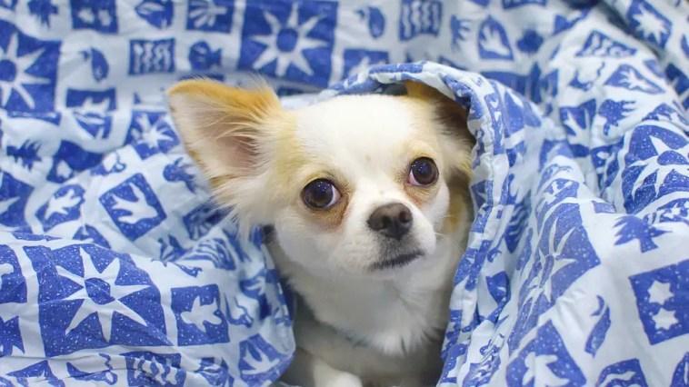 best chew proof dog blanket