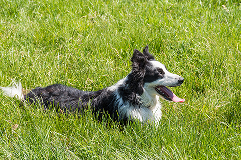 natural bug repellent for dogs