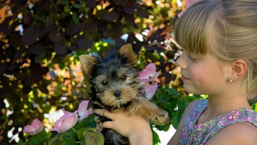 are yorkies good with kids