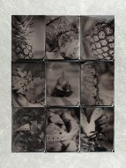 "Jackie Webster, Pineapple No 1, Wet plate collodion tintype, 14""x 16"" http://www.jwebsterphoto.com"
