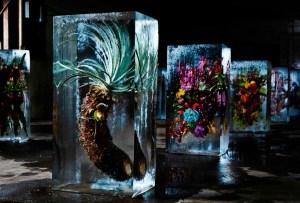Los cubos de hielo florales de Makoto Azuma