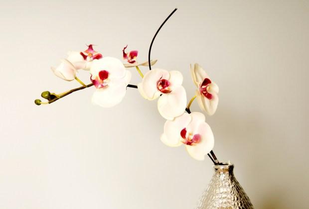 Las plantas de interior más fáciles de cuidar - orquidea-1024x694