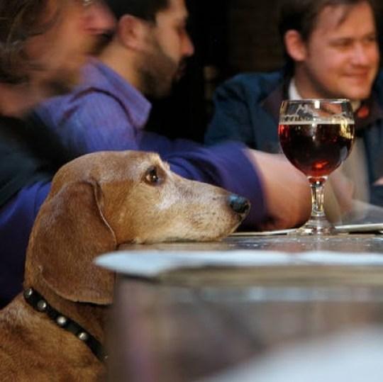 Cerveza para ¿perros? - cerveza-para-perros-2