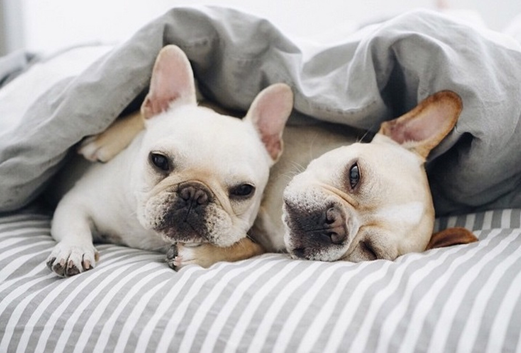 7 consejos para que tu perro no pase frío