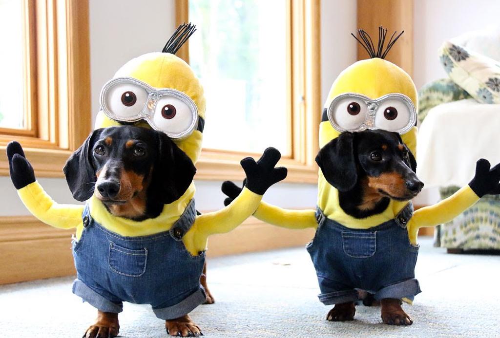 Los disfraces para perro más divertidos para este Halloween - disfraz-para-perro-minion
