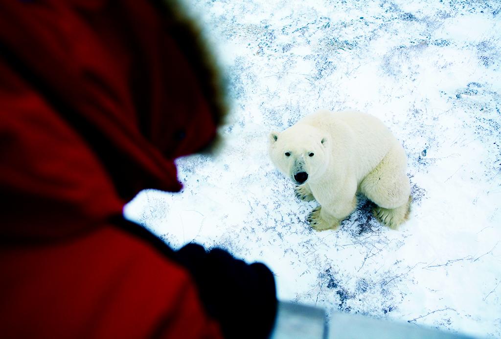 ¿Te gustaría ver la aurora boreal o un oso polar de cerca? ¡Te decimos cómo!