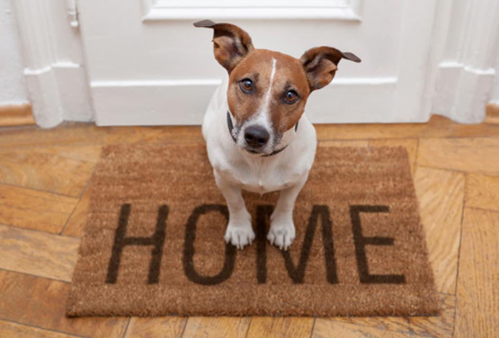 7 consejos para que tu perro no pase frío - perro-dentro-de-casa-cuidados