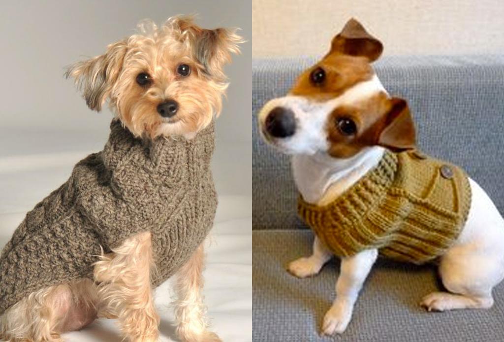7 consejos para que tu perro no pase frío - sweater-perro