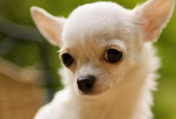 Las 10 Razas De Perros Más Tiernas