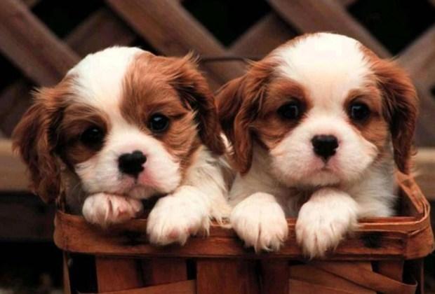 Ya puedes clonar a tu perro - clonacion-de-perros-1024x694
