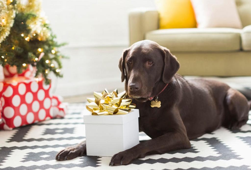 8 regalos que tu mascota amará en esta Navidad