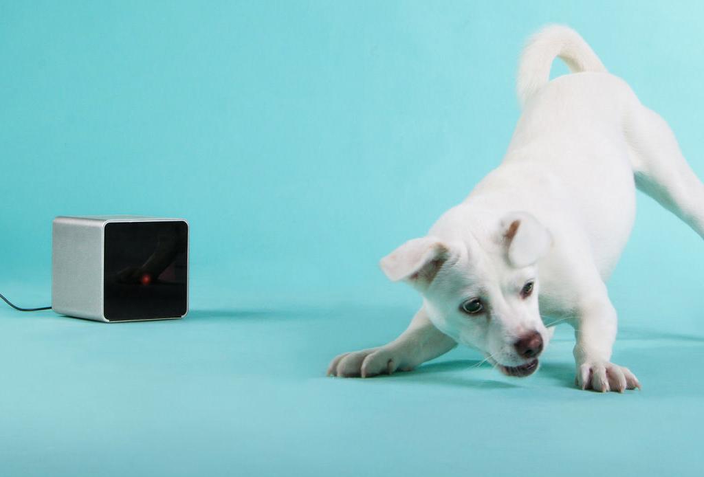 8 regalos que tu mascota amará en esta Navidad - regalos-para-perros-mascotas-gadgets