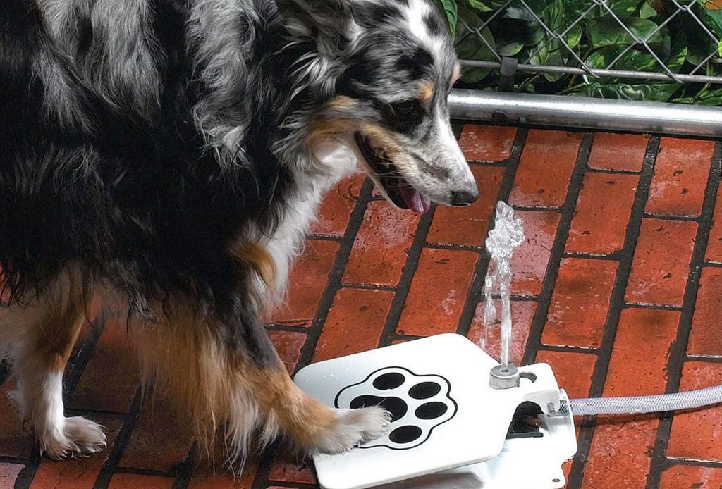 8 regalos que tu mascota amará en esta Navidad - regalos-perros-gadgets-61