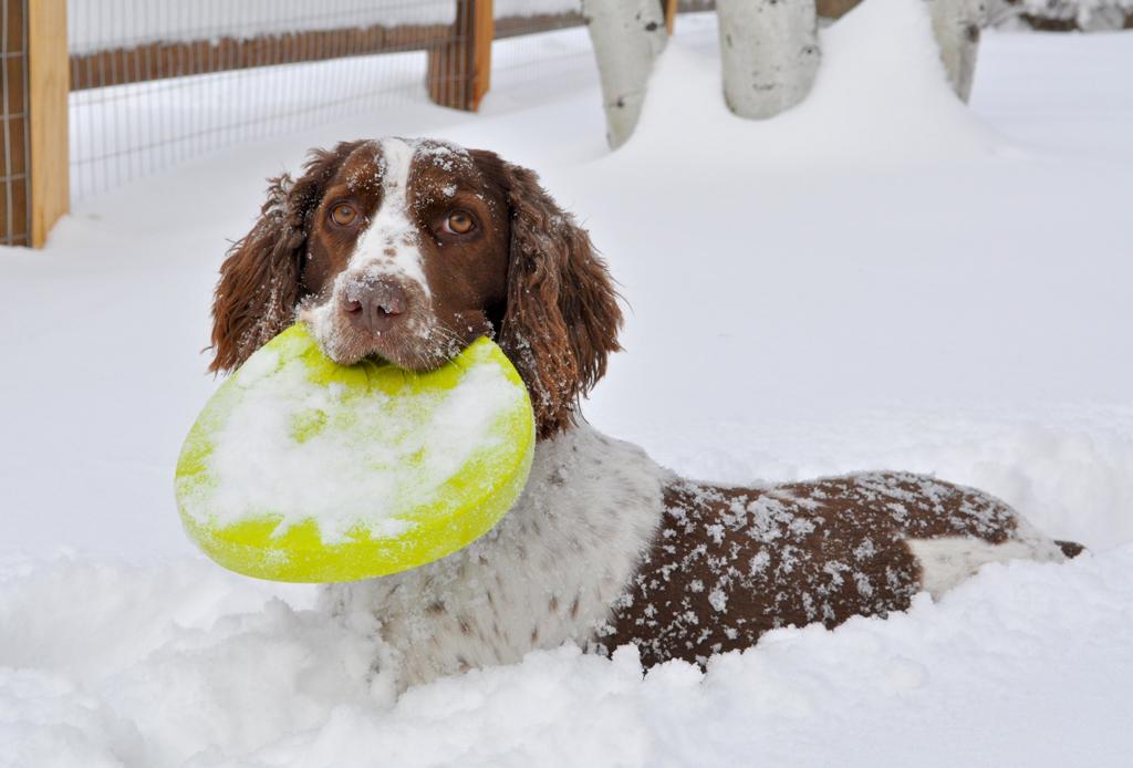 5 resorts dog-friendly para esquiar - resorts-nieve-perros-dog-friendly