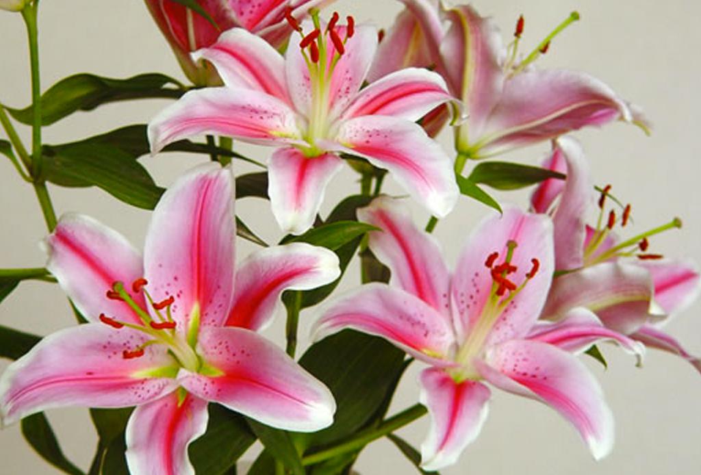 La guía infalible para saber el significado de las flores - flores