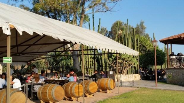 Conoce los viñedos de la Ruta del Vino en Querétaro - vinedo-la-redonda-1024x576