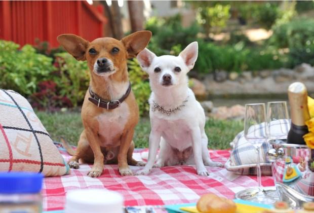 Los perros más famosos del cine - chloe-1024x694