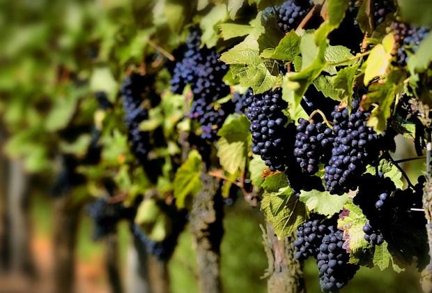 Muy pronto abrirán el Museo del Vino en México - vino-3-1024x694