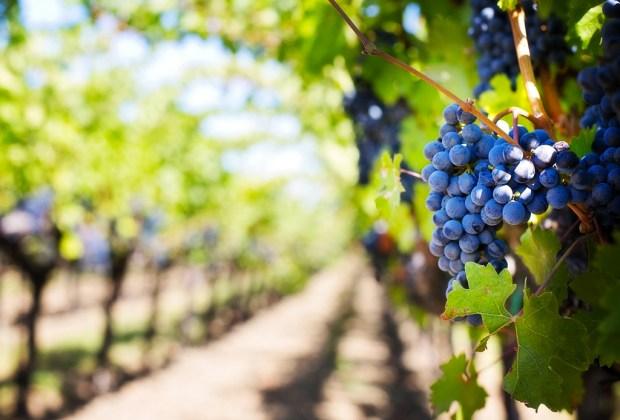 wine-