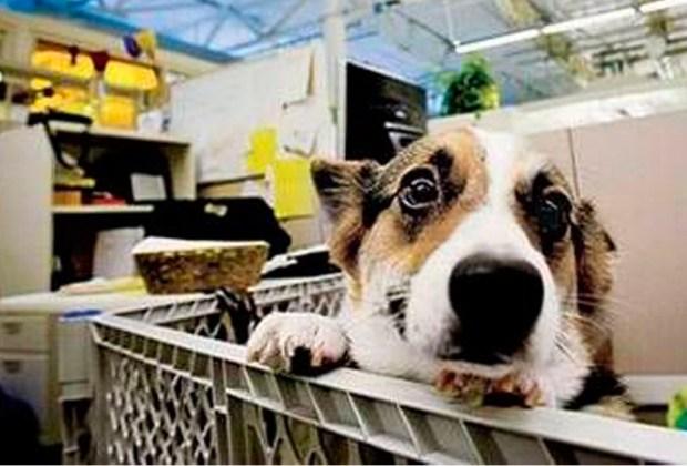 #PetDay: Ve con tu mascota al trabajo - google-1024x694
