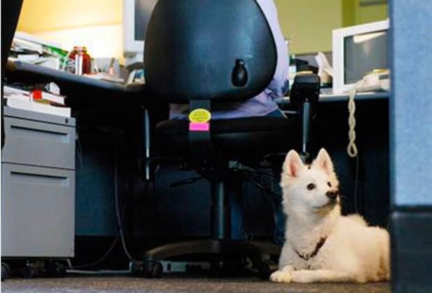 #PetDay: Ve con tu mascota al trabajo - oficina-1024x694