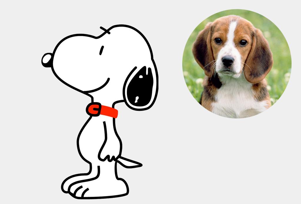 Las razas de perros más famosas de las caricaturas - snoopy
