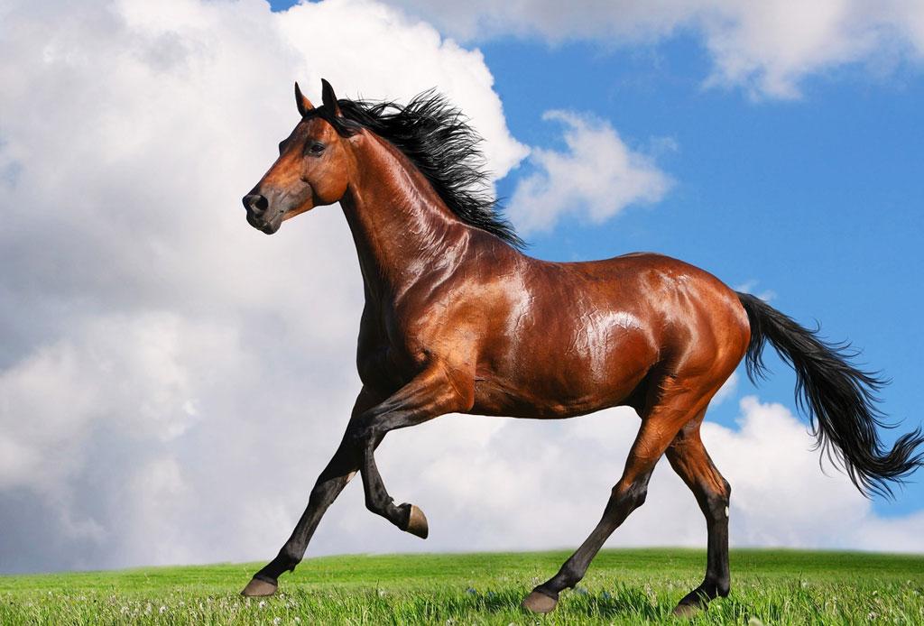 Los mitos y realidades sobre el shampoo de caballo - shampoo-de-caballo-5