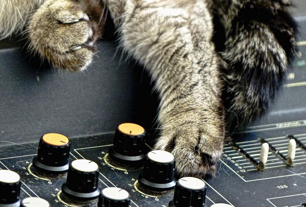 Mewsical: el primer álbum de música hecha por ¡gatos! - musica-para-gatos-2