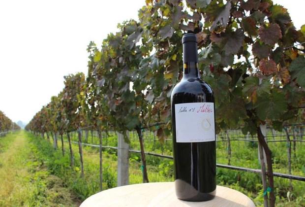 4 etiquetas de vino totalmente mexicano que debes probar - santaelena1-1024x694