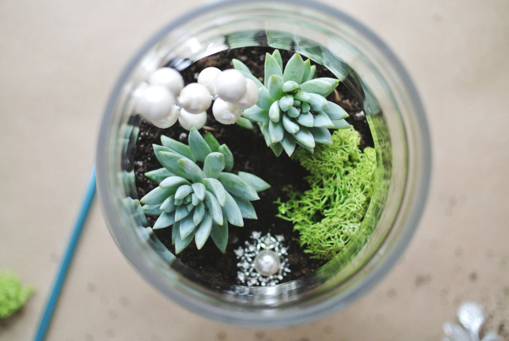 Ponle verde a tu hogar: 7 marcas mexicanas para decorar con plantas